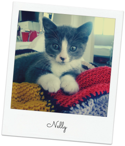 nelly the kitten