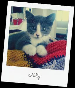 nelly the kitten